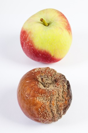 Old wrinkled moldy and fresh apple on white background, healthy and unhealthy food Stock Photo