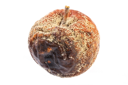 decompose: Old wrinkled apple with mold on white background, unhealthy food