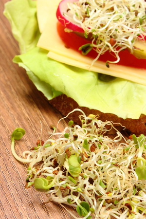 freshly prepared: Freshly prepared vegetarian sandwich with alfalfa and radish sprouts lying on wooden table, concept of healthy lifestyle diet food and nutrition