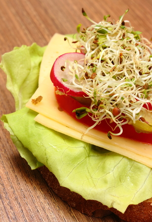 freshly prepared: Freshly prepared vegetarian sandwich with alfalfa and radish sprouts, concept of healthy lifestyle diet food and nutrition