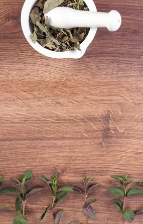herbalism: Natural green and dried mint with white mortar on rustic board, healthy lifestyle and nutrition, copy space for text