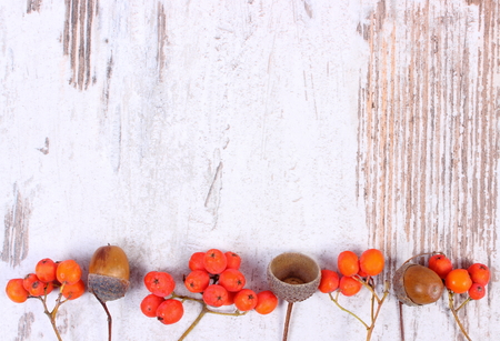 Autumn decoration and copy space for text on old rustic wooden background, red rowan and acorn