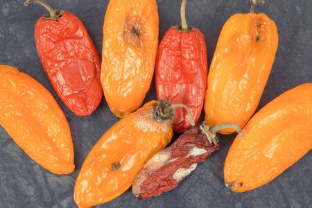 Old wrinkled moldy peppers on dark background, concept of unhealthy and disgusting vegetable