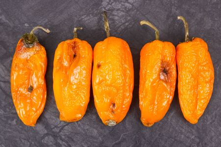 Old wrinkled peppers with mold, concept of unhealthy and disgusting food