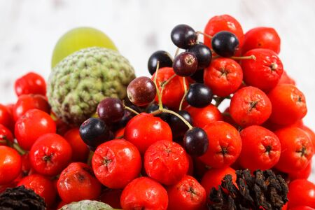 Autumn fruits of forest on old rustic wooden background