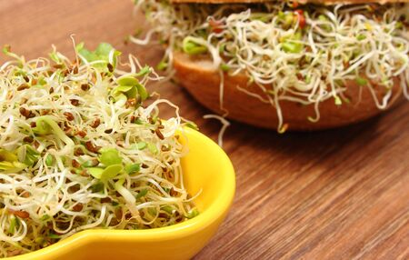 Bowl with alfalfa and radish sprouts and wholemeal bread roll with sprouts. Healthy lifestyles and nutrition