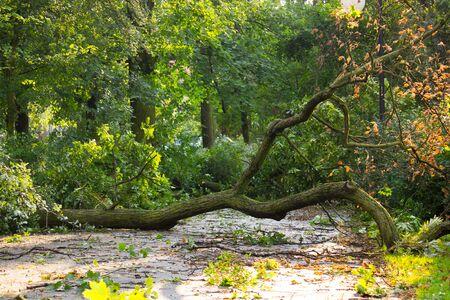 Broken tree on asphalt path by hurricane wind after storm in park 版權商用圖片