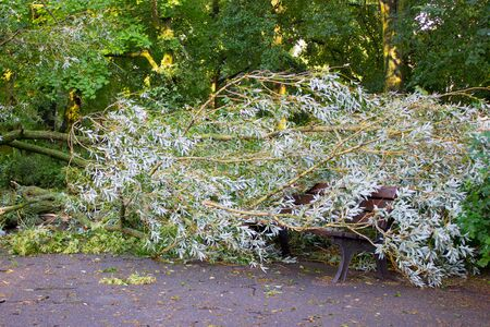 Broken tree by hurricane wind lying on bench in park after storm, dangerous weather