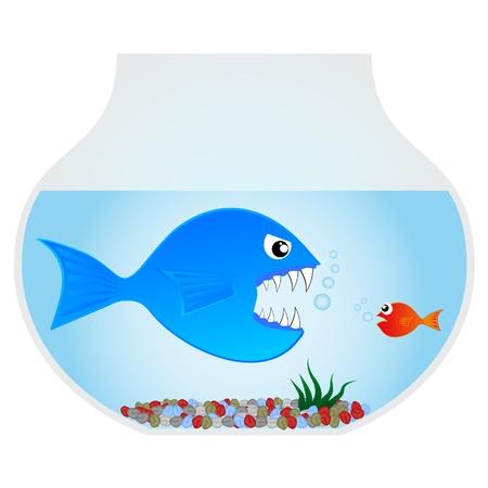 grande e piccolo: Pesce feroce cercando di mangiare un piccolo