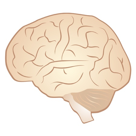 consciousness: Drawing of a human brain