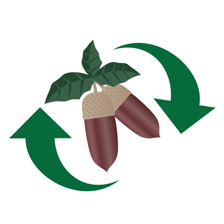 gm: Drawing on acorns with two green arrows  Illustration