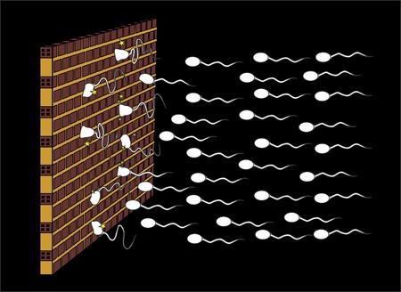 esperma: Espermatozoides golpe� un muro de ladrillo  Vectores