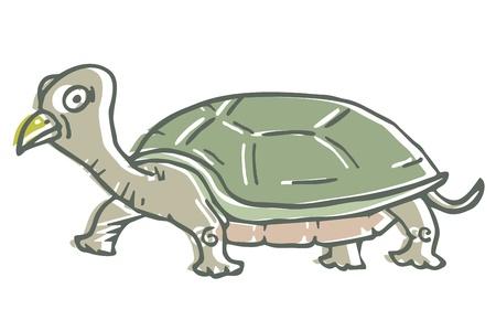 Cartoon rare turtle Vector