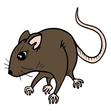 omnivorous: Rat draw