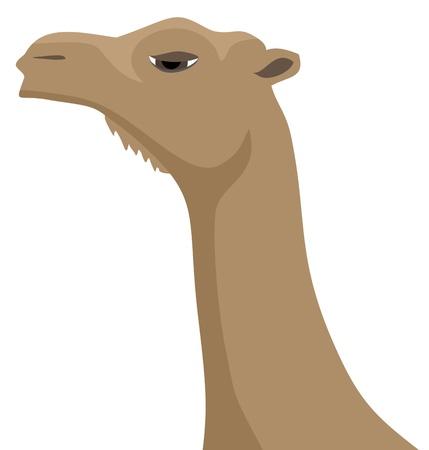 hunchback: Camel face Illustration