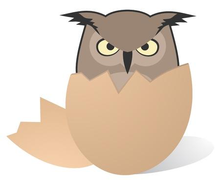 Owl egg Vector