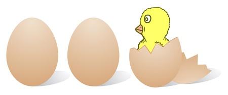 broken eggs: Small chicken