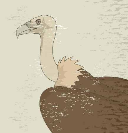Old vulture Stock Vector - 24021431