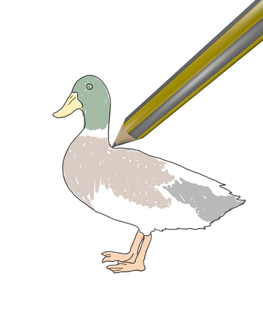 delineate: Duck drawing