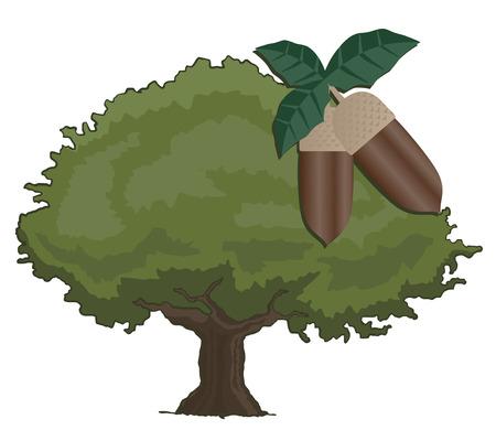 quercus: Oak tree