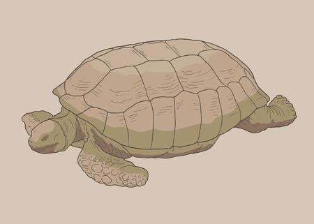 crawling creature: One turtle Illustration