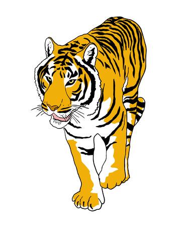 curve claw: Walk tiger Illustration