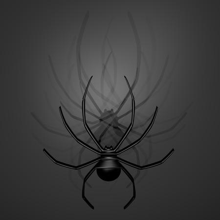 latrodectus: Dark spider Stock Photo