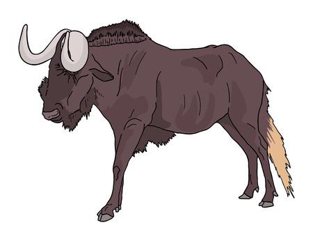 mara: Wildebeest