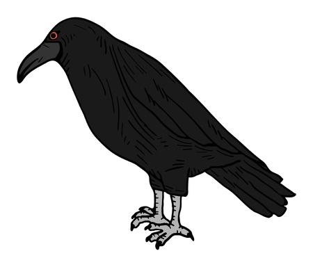 corvus: Black bird draw