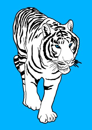 tiger white: Tigre bianca