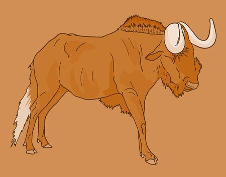 kalahari desert: Wildebeest vector draw