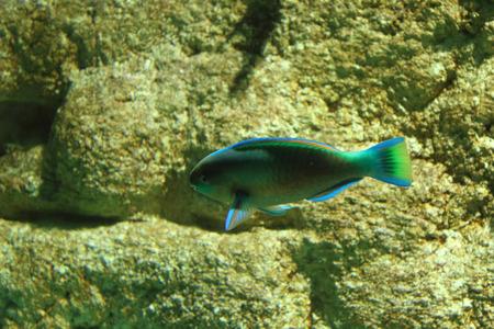 saltwater eel: Underwater ocean