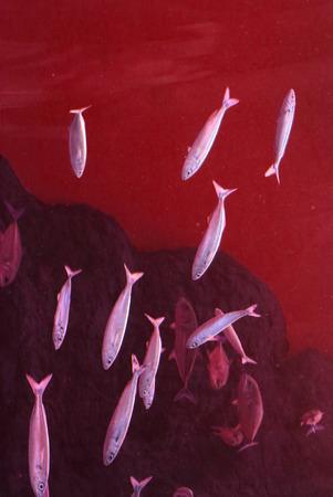 shoal: Nice fish shoal