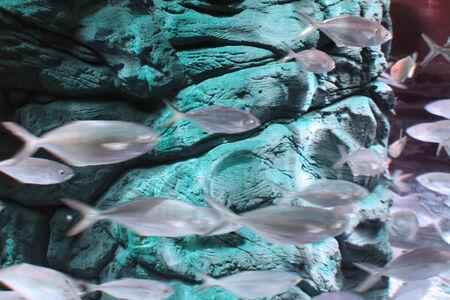 shoal: Fish shoal photo
