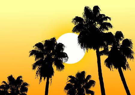 desert oasis: Oasis desert sun
