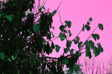 vegetation: Vegetation photo