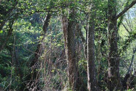 green nature: green nature tree