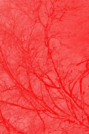 blood veins photo