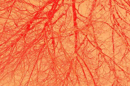 veins detail photo