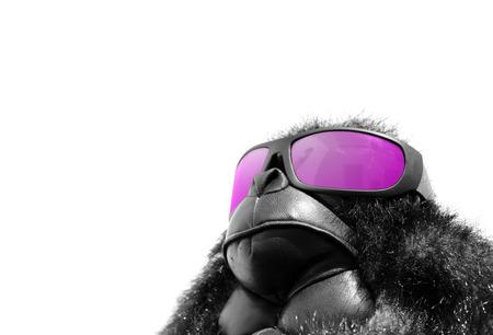 relaxant: Sunglasses monkey Stock Photo