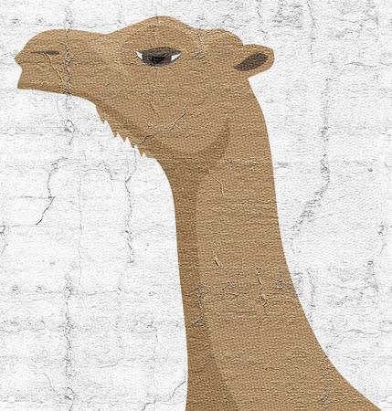corcovado: Camello cara Foto de archivo