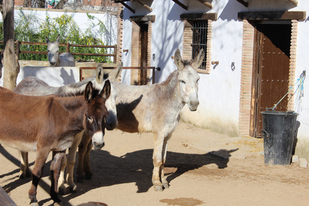 baby ass: two donkey Stock Photo