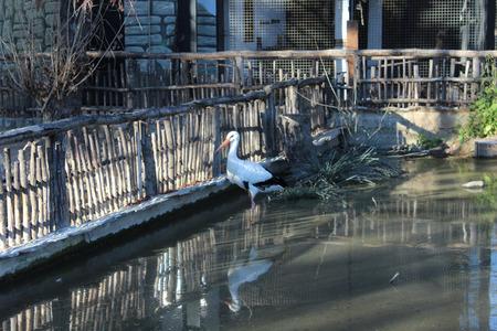 african stork: stork in zoo Stock Photo