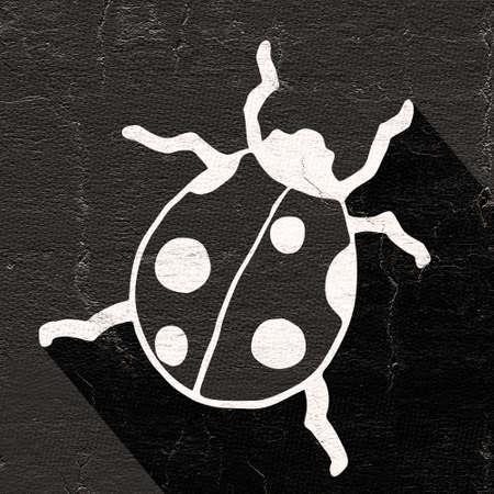 ladybug: black ladybug Stock Photo