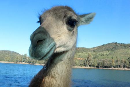 funny donkey: funny donkey face Stock Photo
