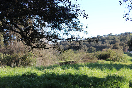 cropland: field photo Stock Photo