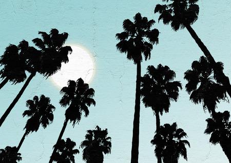 sky: Sky palm