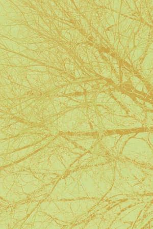 veins: veins detail