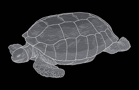 big: Turtle big