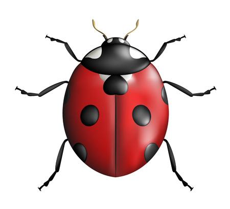 creative ladybug illustration